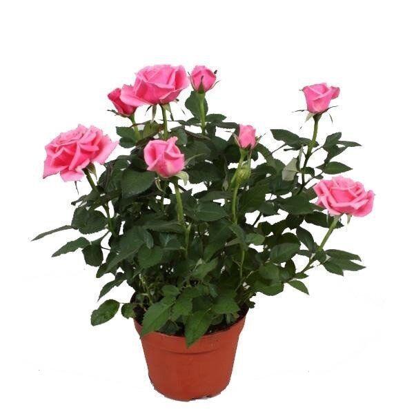 Красивые цветы из салфеток фото