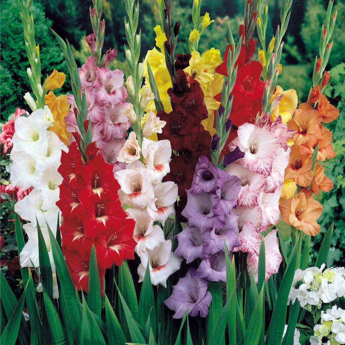 Где купить цветы гладиолусы зимой где в спб можно купить комнатные цветы орхидеи
